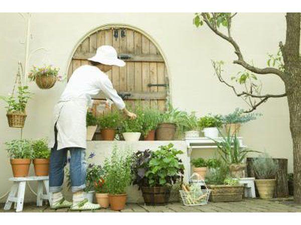 plantas en macetas pueden darle vida a un espacio exterior.