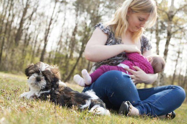 Madre amamantando a su bebé junto a su perro en un parque.