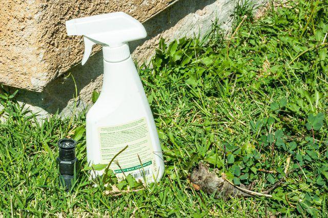 Rata casera y ratones spray Repelente