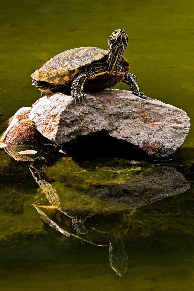 Cómo dar una tortuga de un baño