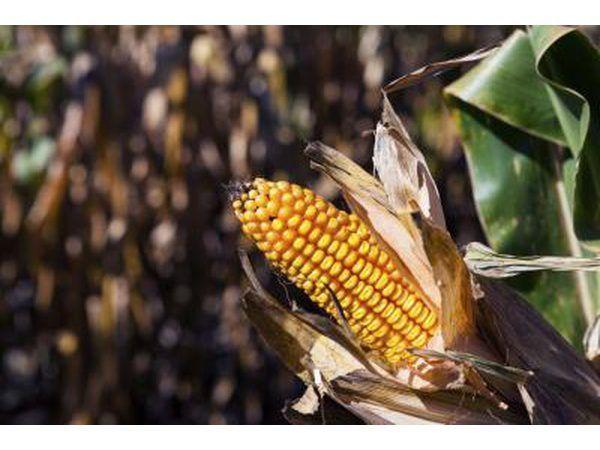 jarabe de maíz oscuro tiene un sabor similar a la melaza.