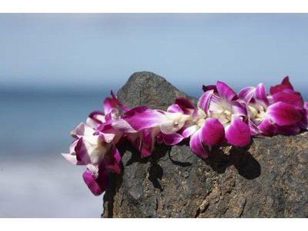 flores frescas collar hawaiano que descansan sobre roca.