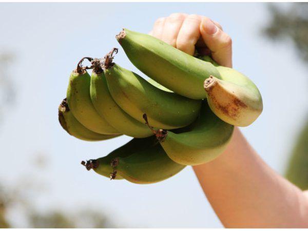 Los plátanos son la fuente segunda más alta de alimentos almidón resistente.