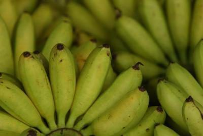 Los plátanos son frutas tropicales comunes disfrutado por la mayoría.