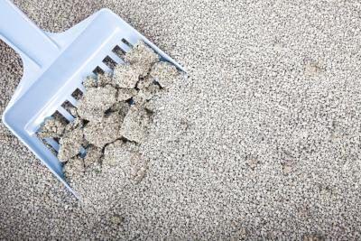 Primer plano de una cuchara en una caja de arena para gatos