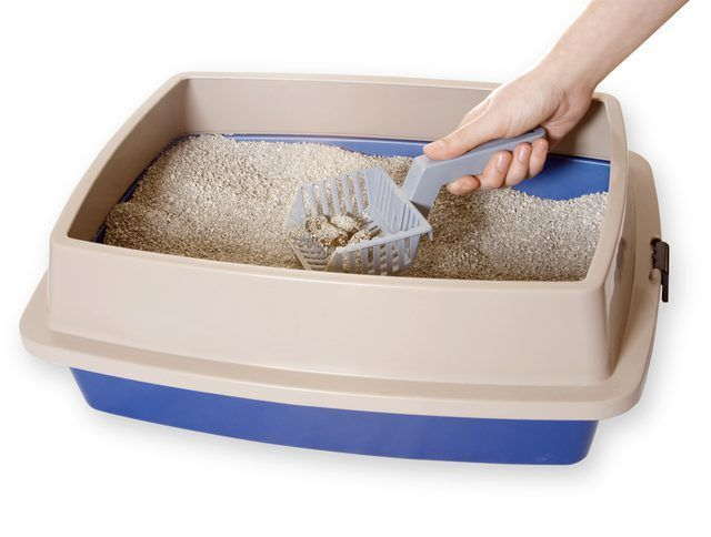Una bola recoger la basura de una caja de arena