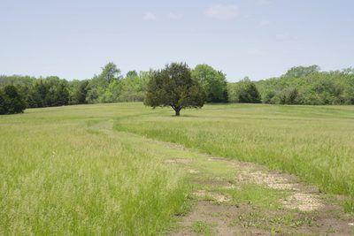 Un camino y un pequeño árbol en el centro del suelo no urbanizable.