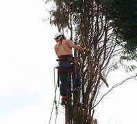 cirujanos de árboles pueden restaurar los árboles enfermos para la salud.