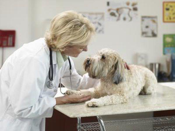 Trilostano se utiliza para tratar a los perros.