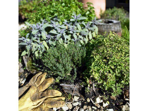 Plantar un jardín de hierbas.