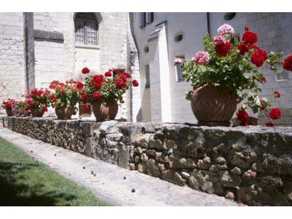 Flores en una pared de piedra
