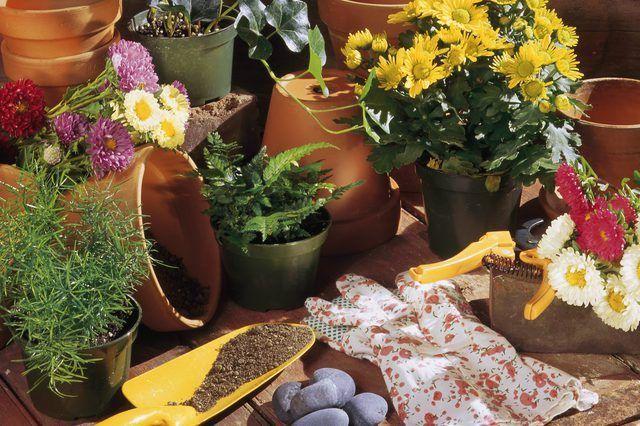 Las plantas perennes pueden crecer en recipientes dado la atención adecuada.