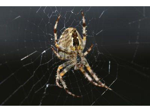 Una araña reclusa marrón en su sitio en la oscuridad.