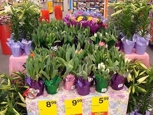 Tipos de flores de Pascua